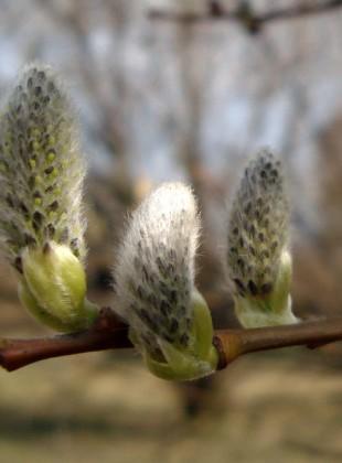 Wiosna - bazie